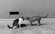 0223_2-22_ブログ練馬猫/ミャー.jpg